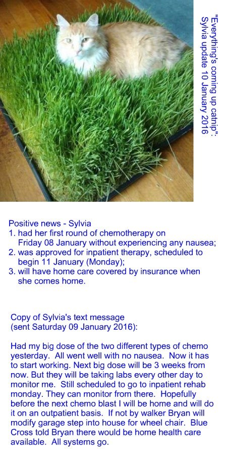 """Everything's coming up catnip"": Sylvia update 10 January 2016"