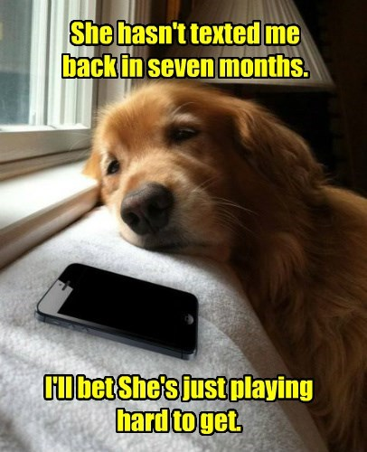 months dogs hard to get caption hasnt texted - 8603207424