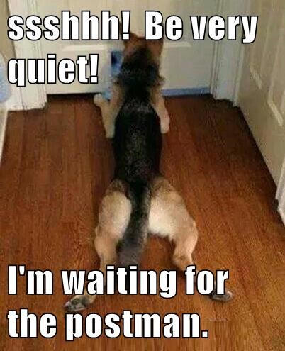 dogs,postman,quiet,waiting,caption,shhh