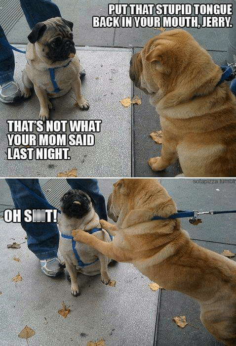 dogs,your mom