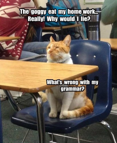 homework cat goggie eat caption lie - 8603726336