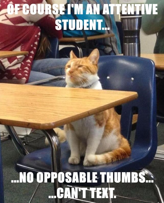 animals cat student text thumbs Attentive caption - 8603730432