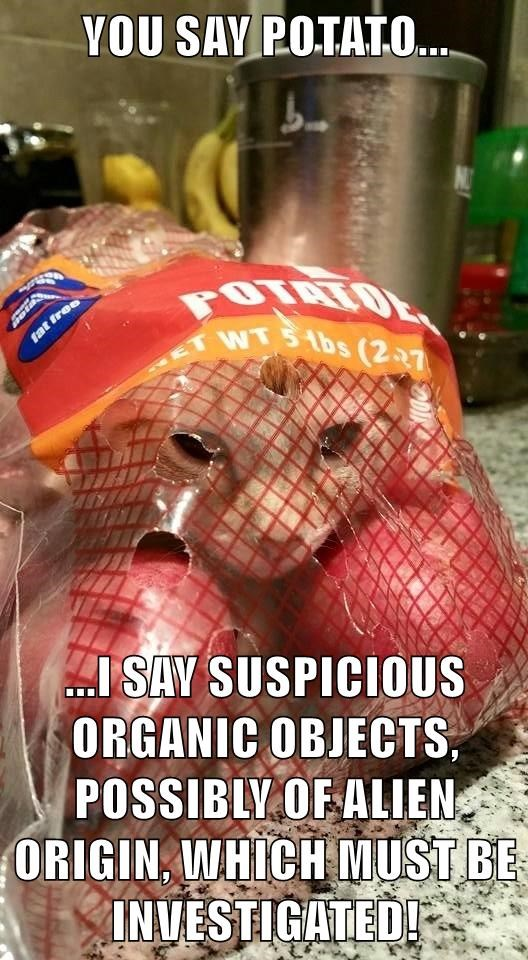 animals dogs origin potato alien suspicious caption organic