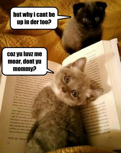 more kitten mommy love caption why cant - 8603738112
