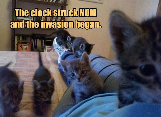 struck,nom,kitten,caption,invasion,clock