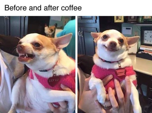 funny animal image of dog before and after coffee
