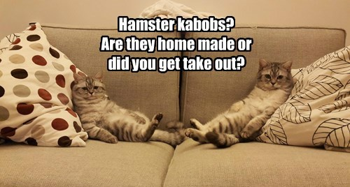 Hamster kabobs?  Are they home made or did you get take out?