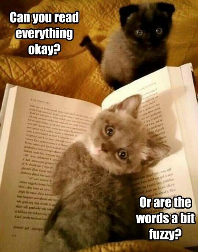 everything read kitten words fuzzy caption - 8603991040