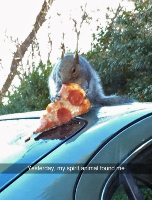 funny animal image of squirrel eating pizza as spirit animal