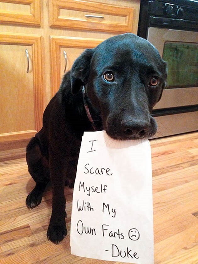 dogs farts notes scared