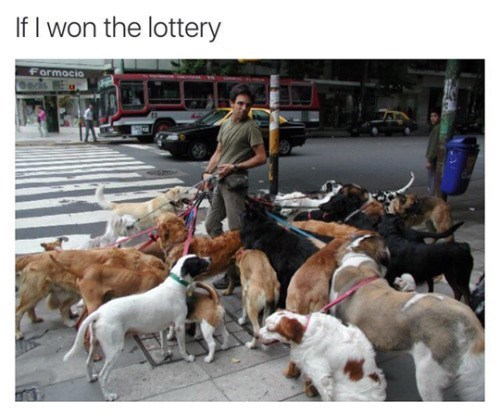 funny animal image of man walking a ton of dogs