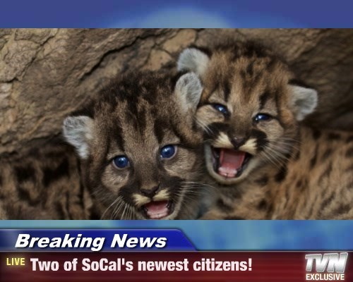 Breaking News - Two of SoCal's newest citizens!