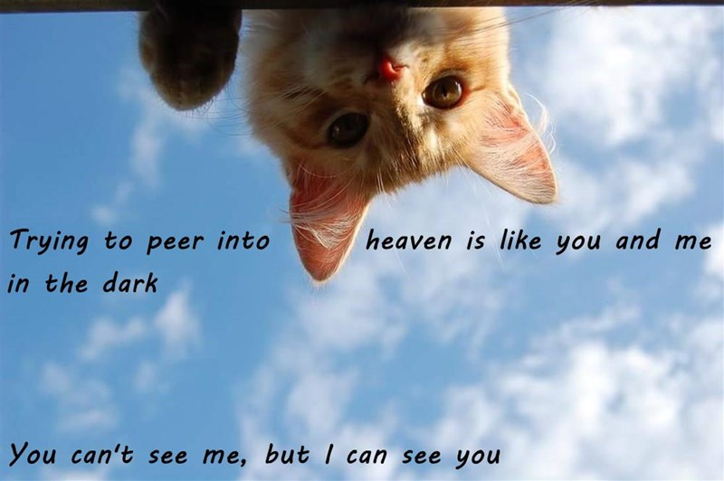 Trying to peer into       heaven is like you and me in the dark You can't see me, but I can see you