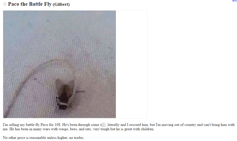 craigslist,fly,for sale