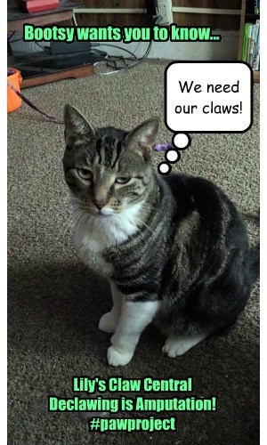 declaw NOT!