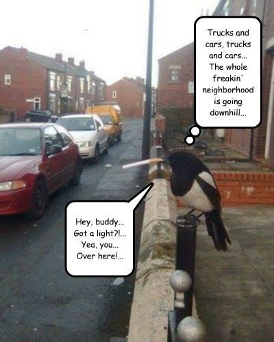 neighborhood watch,cigarette,magpie,funny