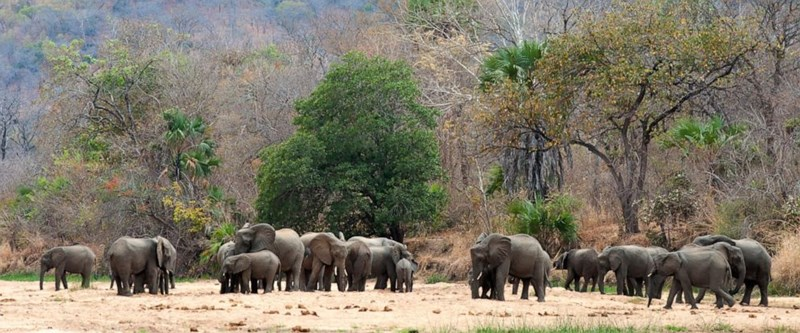 africa elephants wildlife