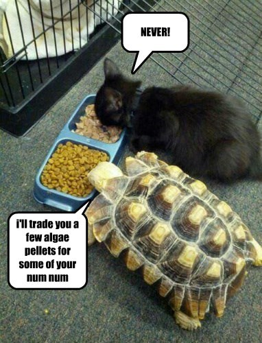 kitten,trade,food,turtle,vegetarian,funny