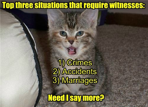 accident caption kitten crimes more say witnesses marriages need - 8605438976