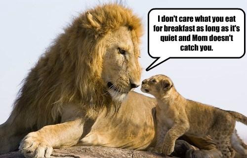 lions breakfast cub funny - 8605442816