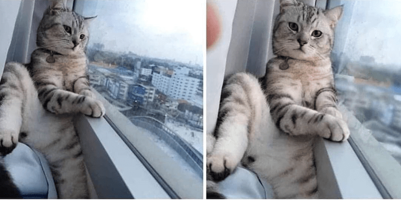 selfie animals cute