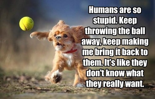 ball caption dogs bring back humans stupid want throwing - 8605459968