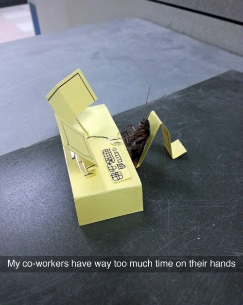 funny memes cockroach desk at work
