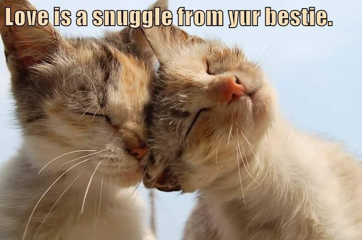 Love is a snuggle from yur bestie.
