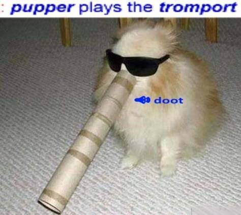 pupper plays the tromport