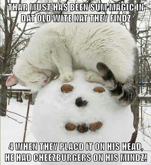 animals cat cheezburgers head frosty the snowman caption hat magic - 8605840896