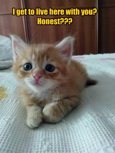 you live honest with kitten caption - 8605880064