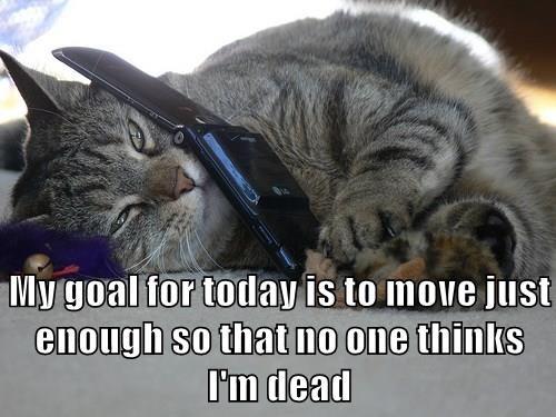 My goal for today is to move just enough so that no one thinks I'm dead