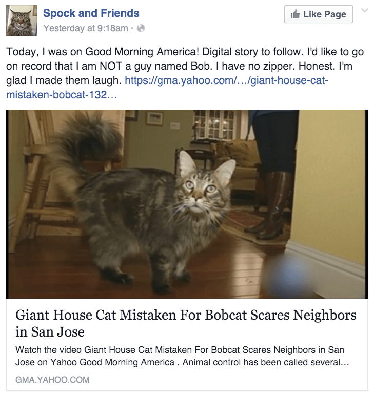 cat news big cat gets mistaken for bobcat by neighbors