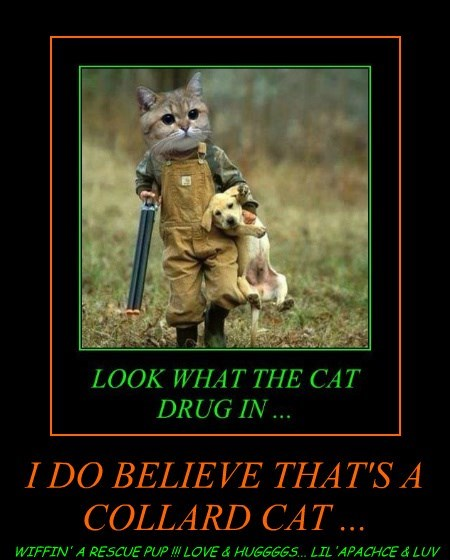 I DO BELIEVE THAT'S A COLLARD CAT ...