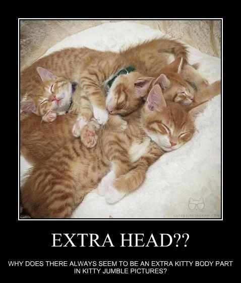 EXTRA HEAD??
