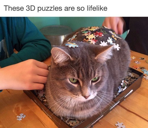 funny animal image of cat in puzzle box