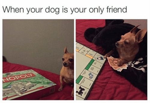 funny animal image of dog playing monopoly