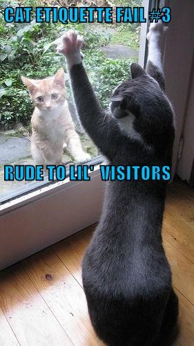 CAT ETIQUETTE FAIL #3 RUDE TO LIL'  VISITORS