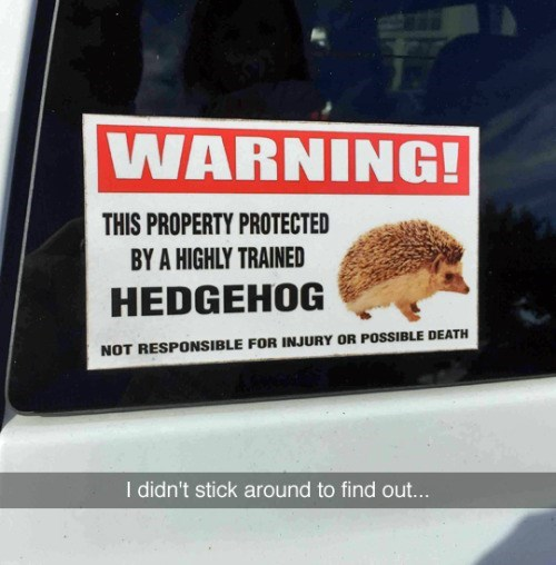 trolling memes highly trained hedgehog sign