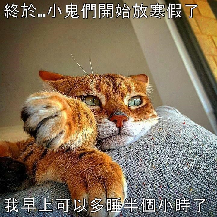 animals - 8606368768