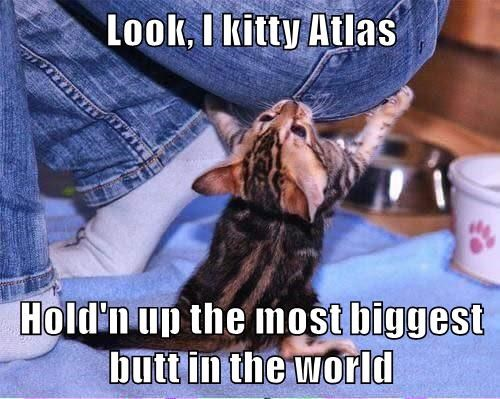 animals butt atlas biggest caption kitten holding up world - 8606461696
