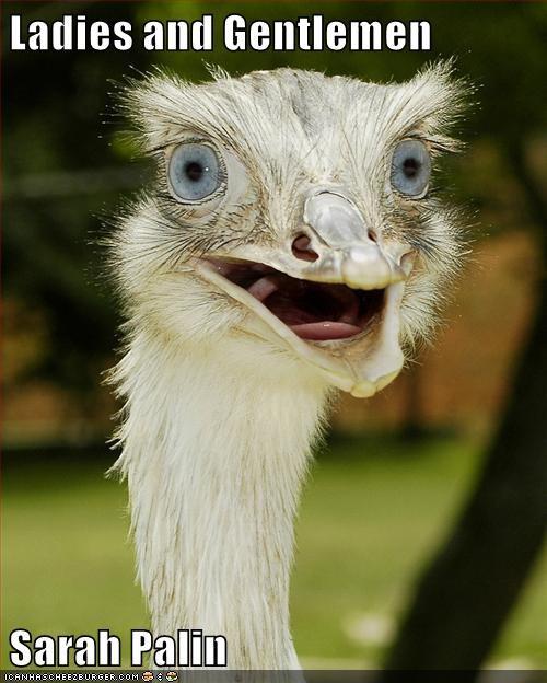 TLL,Pundit Kitchen,Sarah Palin,funny,ostrich