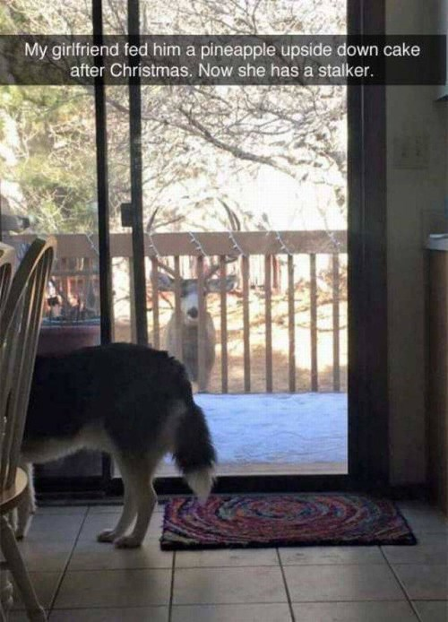 funny animal image of deer who hangs out at house