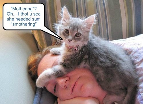 cat,caption,needed,mothering,thought,smothering