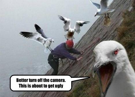 climber,seagulls,hillside,the birds