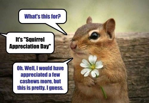appreciation,squirrel,lol,day
