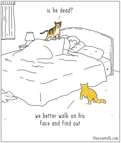 web comics cats sleep Let's Also Just Meow at the Food Bowl to Double Check