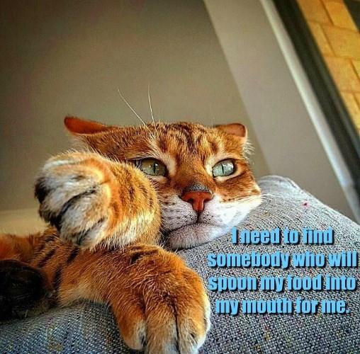 cat relationships food - 8606781696