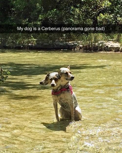 dogs mythology animals - 8606813184