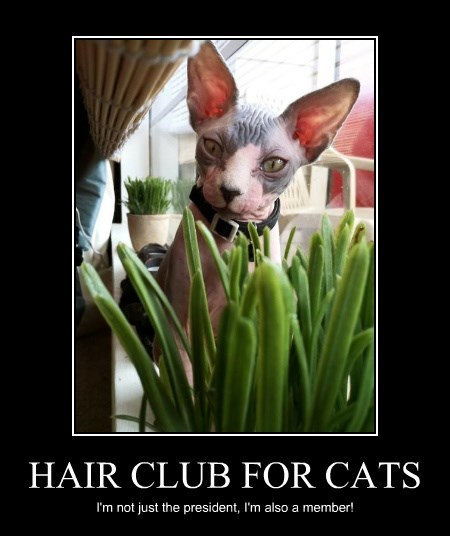 HAIR CLUB FOR CATS I'm not just the president, I'm also a member!